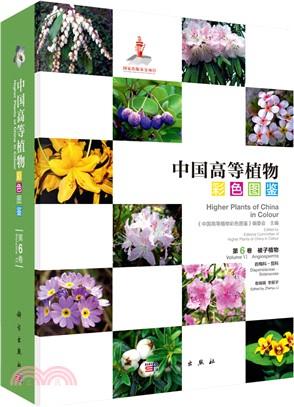 中國高等植物彩色圖鑒(第六卷):被子植物‧岩梅科-茄科(簡體書)